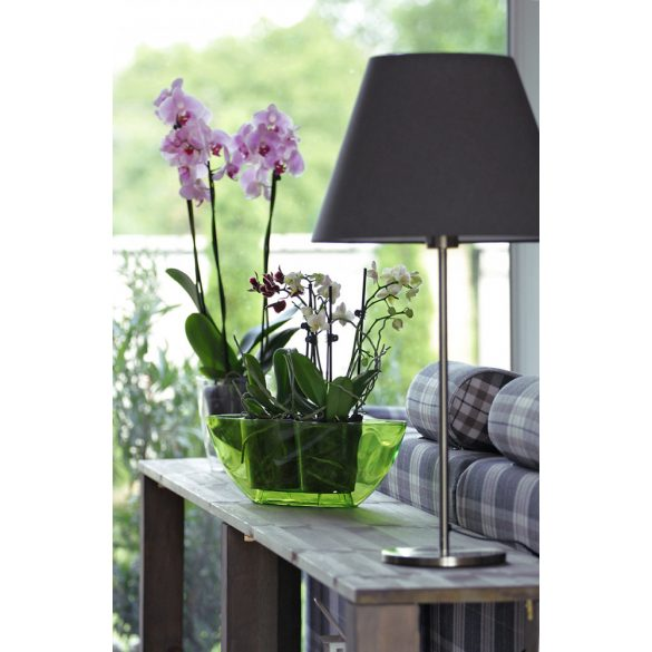 Coubi Orichid virágcserép - nagy